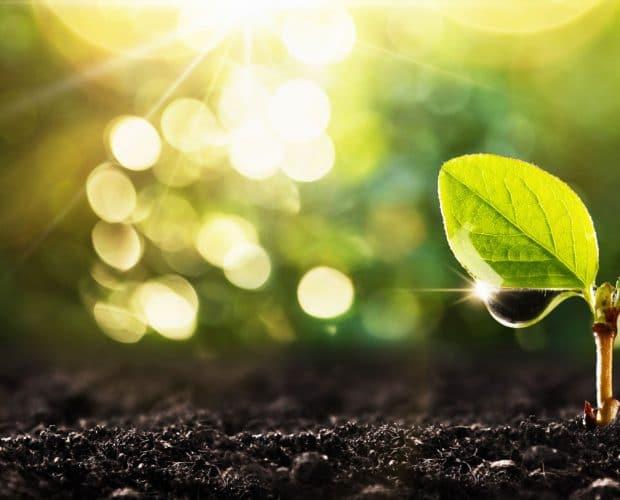 logistica-sostenible-planta-reciclaje-pallets-ribawood