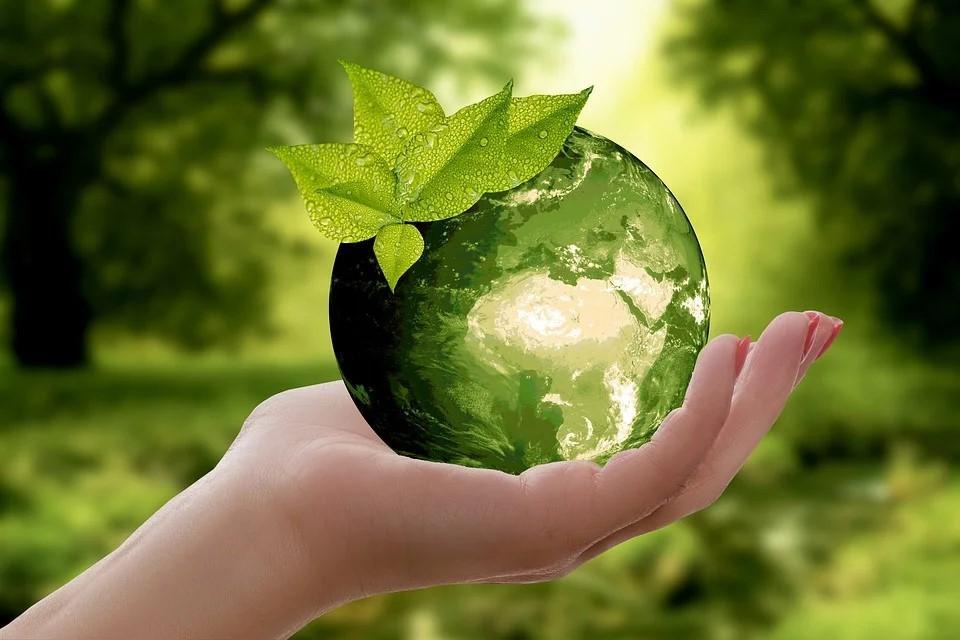 Economia circular y residuos cero-Palets de plástico-Ribawood